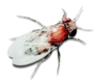 gesundheitssch dlinge infos und tipps m use ratten. Black Bedroom Furniture Sets. Home Design Ideas